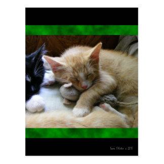 """Naptime"" Kittens Postcard"