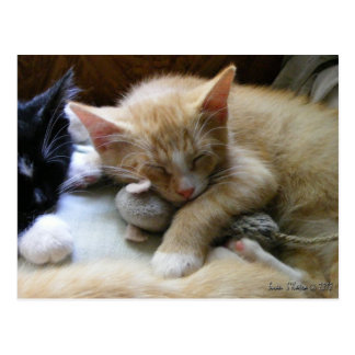 """Naptime"" Kittens Postcards"