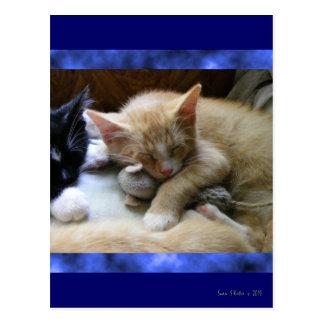 """Naptime"" Kittens Post Cards"
