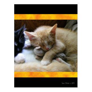 """""""Naptime"""" Kittens Post Card"""