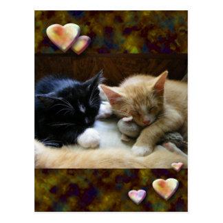 Naptime Kittens Postcards