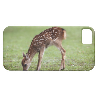 Nara Prefecture, Honshu, Japan iPhone 5 Cases