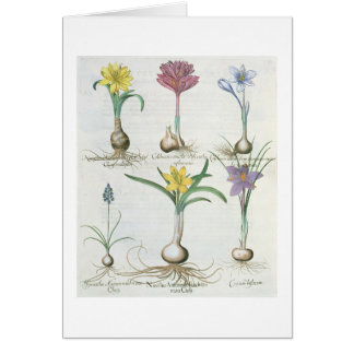 Narcissi, Crocuses and Hyacinth: 1.Narcissus autum Greeting Card