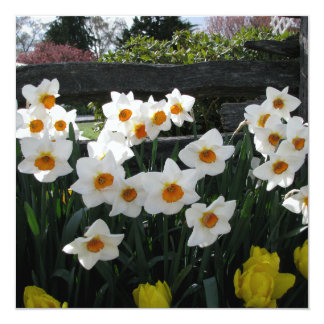 "Narcissus and Wooden Fence 5.25"" Square Invitation Card"