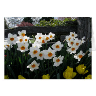 Narcissus and Wooden Fence Note Card
