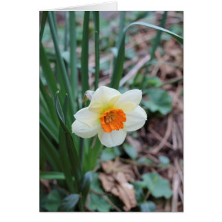 Narcissus Stationery Note Card