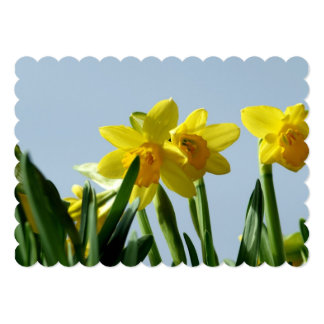 Narcissus Personalized Announcement