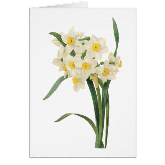 narcissus Narcissus tazetta by Redouté Card