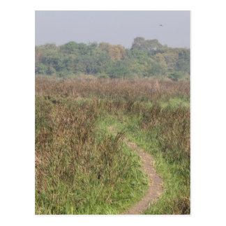 Narrow path through tall grass postcard