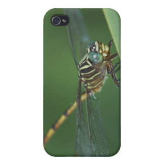 Narrow-striped Forceptail, Aphylla protracta, iPhone 4/4S Covers