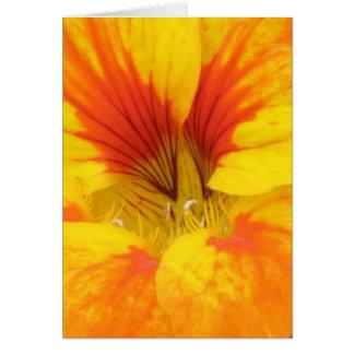 Nasturtium Card