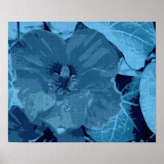 Nasturtium in Blue Poster