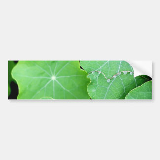 Nasturtium Leaves with Water Drops Bumper Sticker