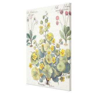 Nasturtiums and Daisies: 1.Nasturtium Indicum; 2.B Canvas Print