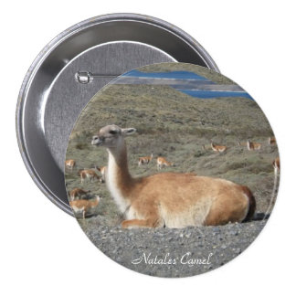 Natales Camels - Large, 3 Inch Round Button