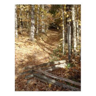 Natchez Trace Trail in Autumn Postcard