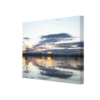 National Wildlife Refuge Dawn Wrapped Canvas Stretched Canvas Print