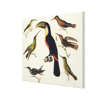 Native birds, including the Toucan (centre), Amazo Canvas Print