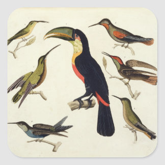 Native birds, including the Toucan (centre), Amazo Square Sticker