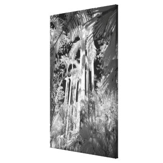 Native Royal Palms in Fakahatchee Strand, Canvas Print