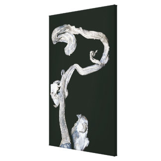 Native Silver Stretched Canvas Prints