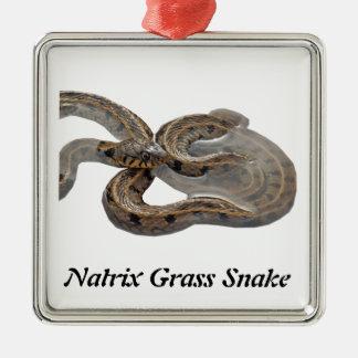 Natrix Grass Snake Silver-Colored Square Decoration
