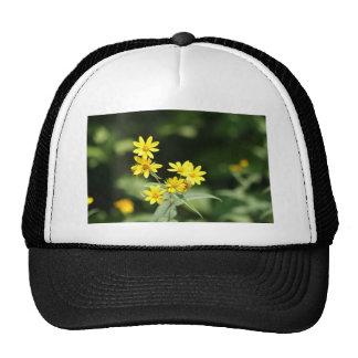 natrual bridge pic 002 hats