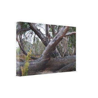 Natural Australia, The Fallen Logs, Canvas Print