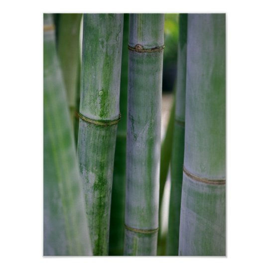 Natural Bamboo Zen Background Customised Template Poster