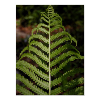 Natural Green Fern Frond Poster