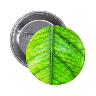 natural  Green leaf leaves Trees Earth Beautiful D 6 Cm Round Badge