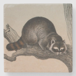 Natural History Art Racoon Stone Coaster