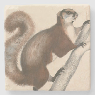 Natural History Art Squirrel Stone Coaster