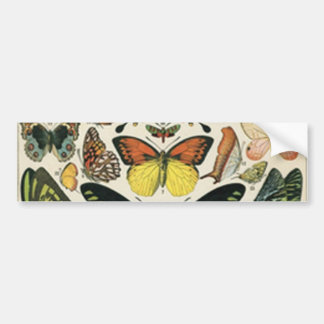 Natural History Butterfly Bumper Sticker