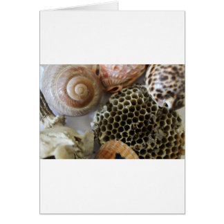 natural objects card