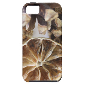 natural objects case for the iPhone 5