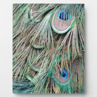 Natural Peacock Eyes Fluffy Feathers Plaque