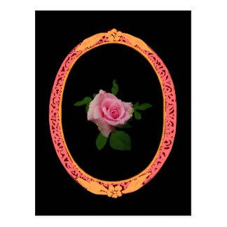 Natural Pink Rose Flower Postcard