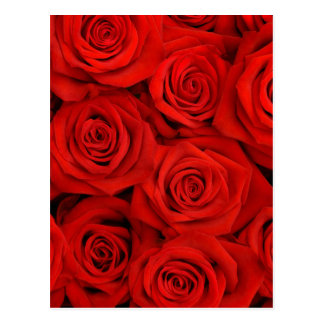 Natural red roses background postcard