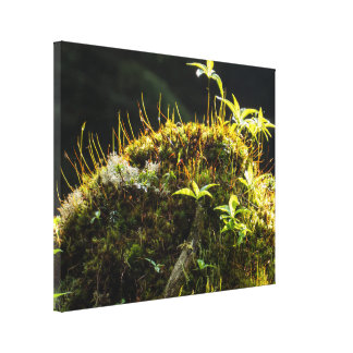 Natural Rock Canvas Print