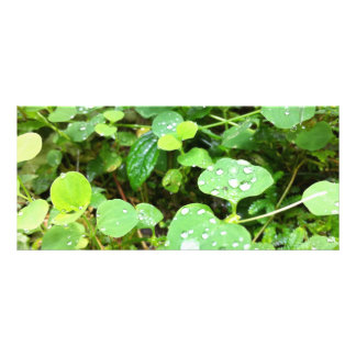 Natural Round Leaves Rack Card Design