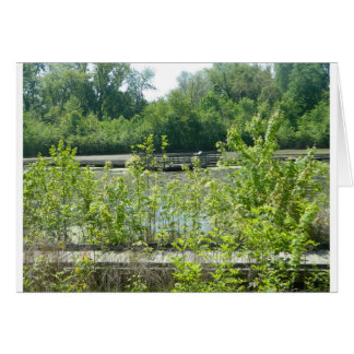 Natural Wetlands Photograph Greeting Card