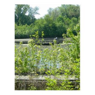 Natural Wetlands Photograph Postcard