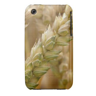 Natural Wheat Spike Case-Mate iPhone 3 Case