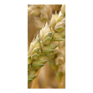 Natural Wheat Spike Rack Card Design