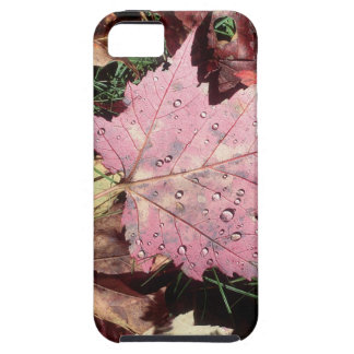 Nature Autumn Leaf Raindrops iPhone 5/5S Covers