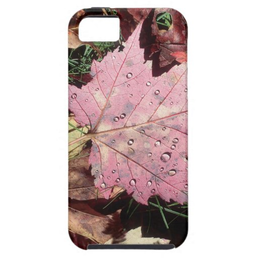 Nature Autumn Leaf Raindrops iPhone 5/5S Covers