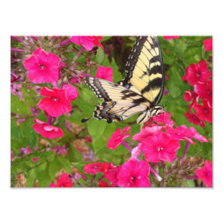 Nature Butterfly Floral Pink Photography Print Art Art Photo