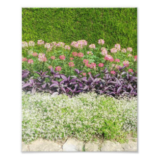 Nature Flower Garden Photo Print