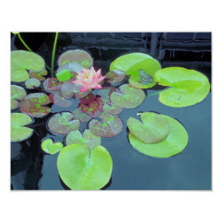 Nature - Frog on a Lily Pad Poster
